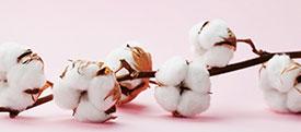 Protections classiques en coton bio